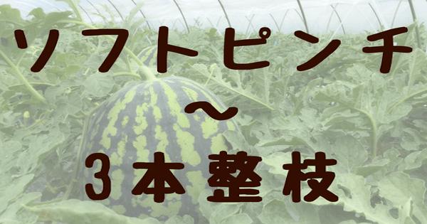 スイカ栽培