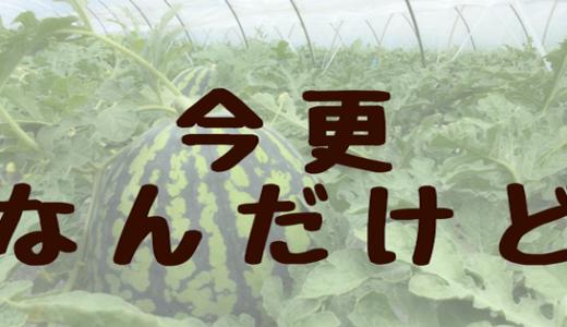 農家にとってブログ書くのはいいことだらけ。