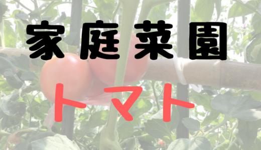 家庭菜園やるならトマトをオススメする4つの理由。