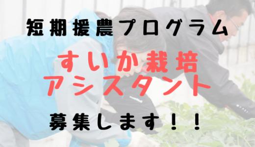 【締め切りました!】【2019年版】幻の「福賀すいか」を守り継ぐために、あなたの力が必要です。山口県阿武町でのシーズンワーク「援農」参加者募集します!