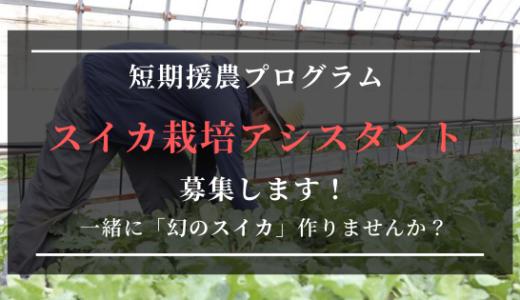 【締め切りました!】幻の「福賀すいか」を守り継ぐために、あなたの力が必要です。山口県阿武町でのシーズンワーク「援農」参加者募集します!