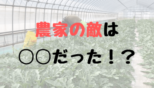 農家の敵は◯◯!!害虫よりも、病気よりも怖いことをガチ農家がお話しします!